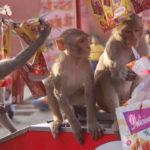 Monos ladrones - Nueva etapa