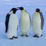 Pingüinos en la colonia miércoles
