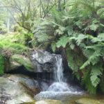 Arroyo en las Montañas Azules, Nueva Gales del Sur, Australia. ©Pixabay