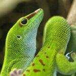 Madagascar Portada. ©Pixabay