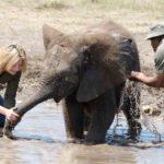 13 Themba jugando en el agua con Lyndal y Víctor. ©Rock Wallaby Productions