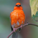 Aves de Madagascar. ©Pixabay