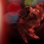 Araña saltarina en Tokio, imagen compuesta. ©BBC 2014