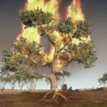 Incendios-2