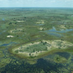 Isla aislada en el Delta del Okavango