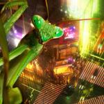 Mantis religiosa en Tokio, Japón, imagen compuesta. ©BBC 2014