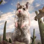 Ratón saltamontes y Harris hawk, Arizona - Imagen compuesta. ©BBC 2014