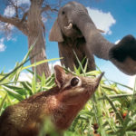 Sengi, nariz a nariz con un elefante en la sabana africana. ©BBC 2014