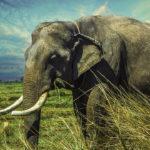 Elefante-sentidos-extraordinarios. ©Pixabay