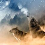 Lobos-aullando-sentidos-extraordinarios. ©Pixabay