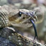Serpiente-sentidos-extraordinarios. ©Pixabay