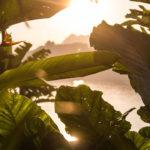 Atardecer en la jungla. ©Pixabay