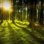 Bosque al atardecer. ©Pixabay