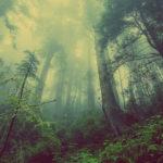 Bosque con niebla. ©Pixabay
