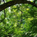 Selva con árboles. ©Pixabay