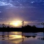 Selva, río Demerara, en Guyana. ©Pixabay
