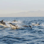 Delfines,-False-Bay,-Sudáfrica.-©Homebrew-Films