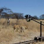 Grabando leonoes 2