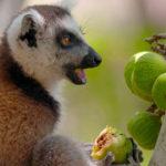 Madagacar