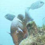 Romano-rojo-en-el-área-marina-protegida-de-De-Hoop.-©Homebrew-Films