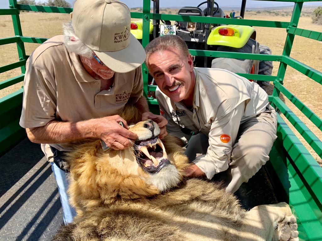 Mundo Salvaje: los impresionantes colmillos de un león