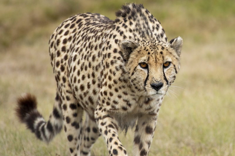 Mundo Salvaje - Leopardo