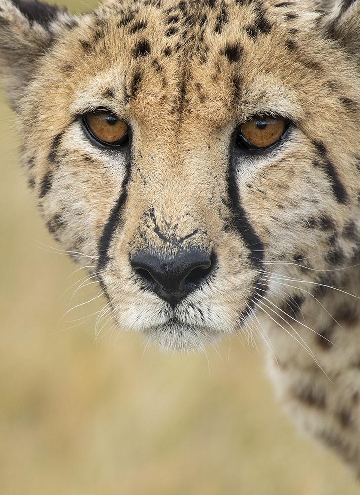 Mundo Salvaje - Leopardo Posando