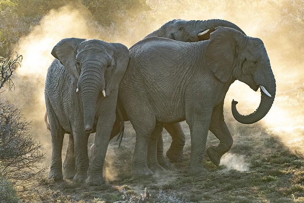 Mundo Salvaje - Tres elefantes se columpiaban...