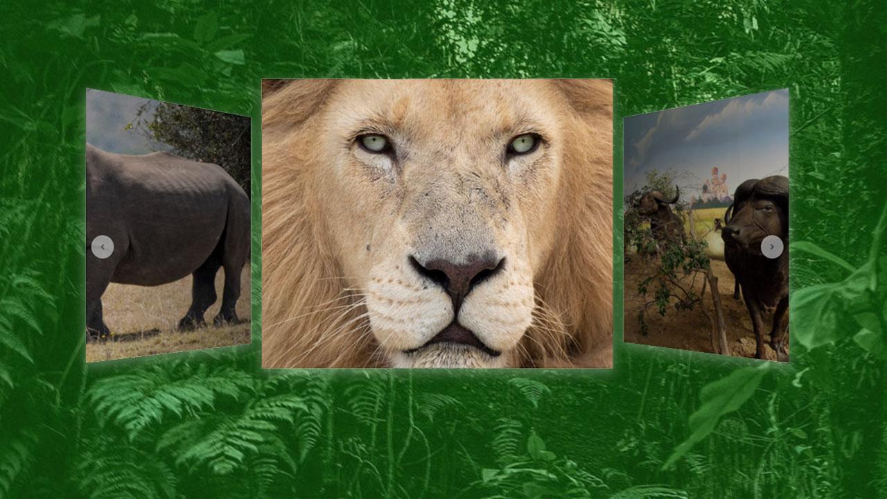 Hechos curiosos sobre los animales de Mundo Salvaje