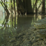 Anaconda verde descansando por el agua