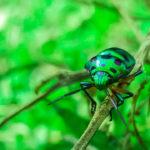 Escarabajo verde. ©Pixabay