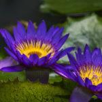 Flores Silvestres. ©Pixabay