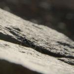 Hormiga del desierto descansando sobre una gran roca