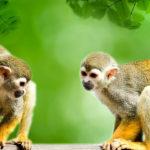 Monos. ©Pixabay