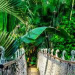 Puente en la Selva. ©Pixabay