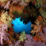 Agujero en el arrecife, Papua Nueva Guinea ©Shutterstock