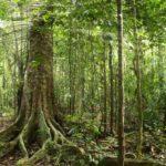 Bosque verde con rayo de luz, Amazonas ©Shutterstock