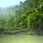 Jungla en Vietnam, Asia ©Shutterstock