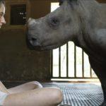 Rino con veterinaria