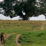 Camino al árbol ©Barbara Reed