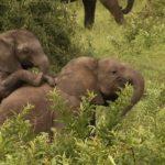 Elefantes pequeños ©Talking Pictures