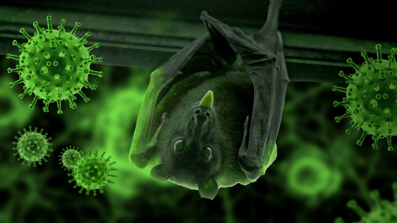 Revelaciones sobre el origen del virus