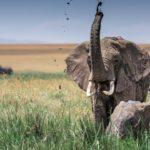 Elefante con cría moviendo la trompa