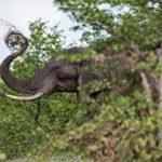 Elefantes entre las ramas