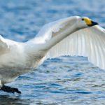 Planeta Natural ave blanca