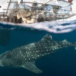 Planeta Natural ballena