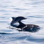 Planeta Natural delfines