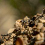 Planeta Natural hormigas