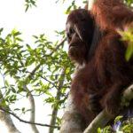 Borneo 1