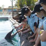 Estudiantes de Zoológico Azul con delfín